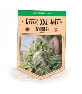 Critical XXL Auto (Garden of Green)