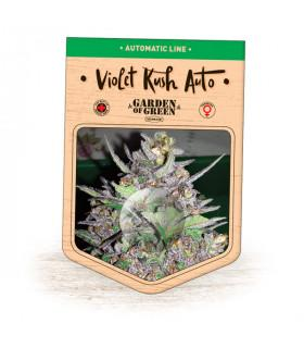Violet Kush Auto (Garden of Green)