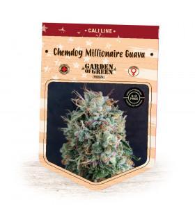 Chemdog Millionaire Guava (Garden of Green)