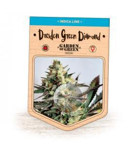 Dresden Green Diamond (Garden of Green)