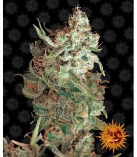 Red Dragon (Barney's Farm)