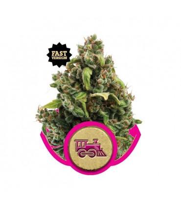 Candy Kush Express FAST Version (RQS)