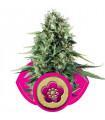 Power Flower (RQS)