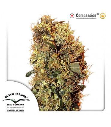 ComPassion CBD (Dutch Passion)