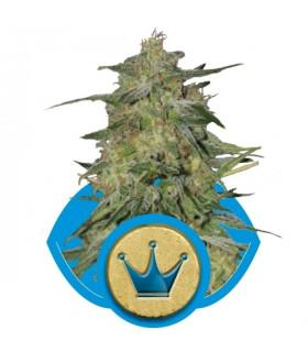 Royal Highness (RQS)