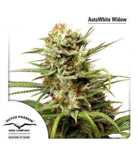 AutoWhite Widow