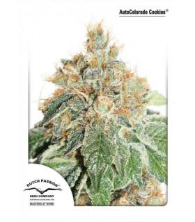 AutoColodo Cookies (Dutch Passion)