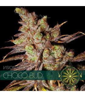Choco Bud (Vision Seeds)