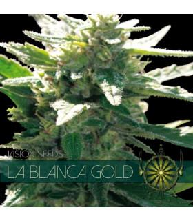 La Blanca Gold (Vision Seeds)