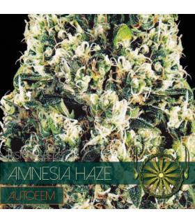 Amnesia Haze AutoFem (Vision Seeds)