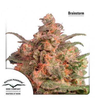 Brainstorm (Dutch Passion)