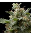 Super Hash (Pyramid Seeds)