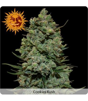 Cookies Kush (Barney's Farm)