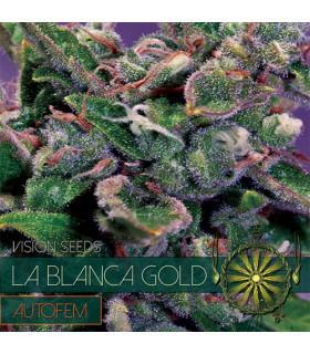 La Blanca Gold AutoFem (Vision Seeds)