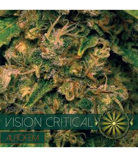 Vision Critical AutoFem (Vision Seeds)