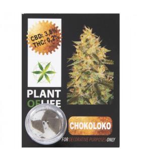 CBD Hash 3,8% Chokoloko